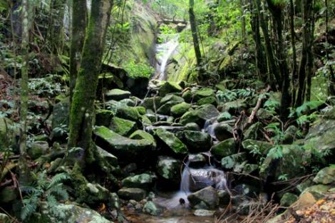 Queensland's Wet Tropics