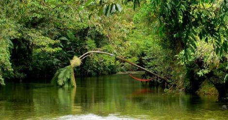 Mossman River, Por Douglas