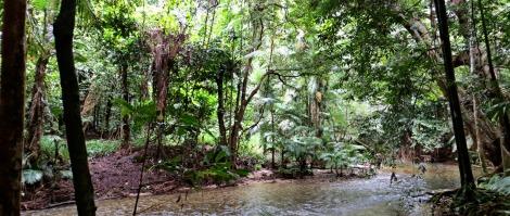 Mossman River, Port Douglas