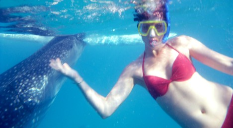 Amy Peel swimming with Whale Sharks