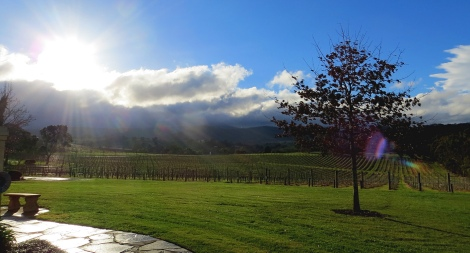 Sunrise at De Bortoli vineyard