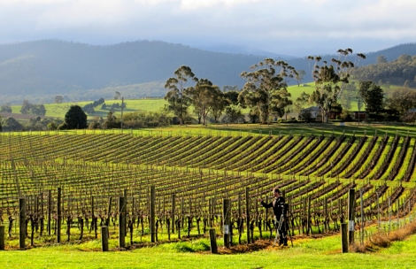 Victorian Wine Country