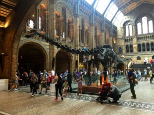 The Natural History Museum 01